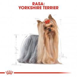 Royal Canin Breed Yorkshire Terrier Adult - Karma Sucha dla Psów Dorosłych York 7,5kg