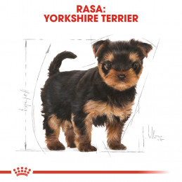 Royal Canin Breed Yorkshire Terrier Puppy - Karma Sucha dla Szczeniąt York 1,5kg