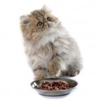Karmy i przysmaki dla kotów