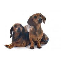 Produkty na odchudzanie i cukrzycę dla psów | zoo24.pl