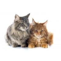 Produkty na kamicę moczową dla kotów | zoo24.pl